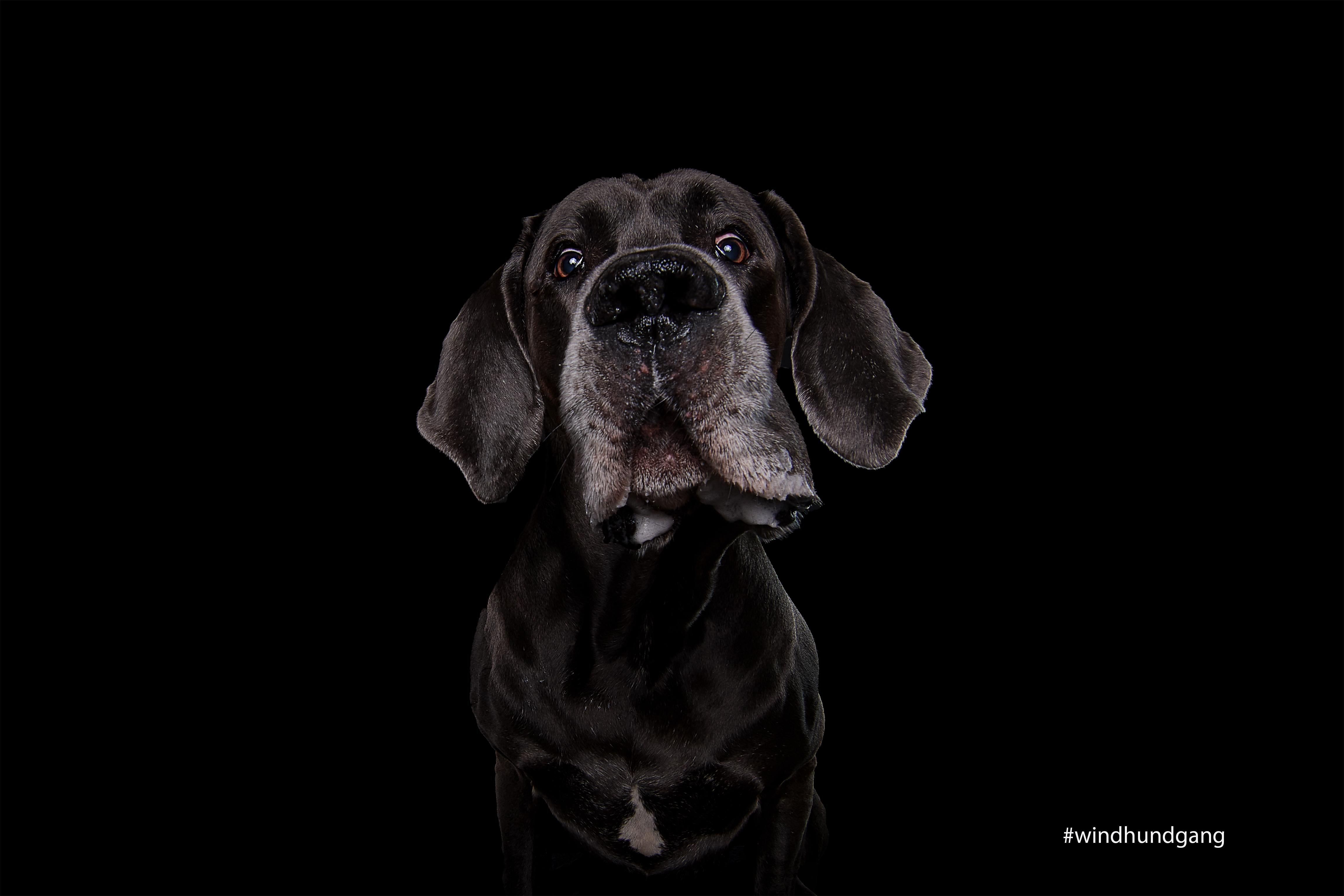 Hundefotograf Köln