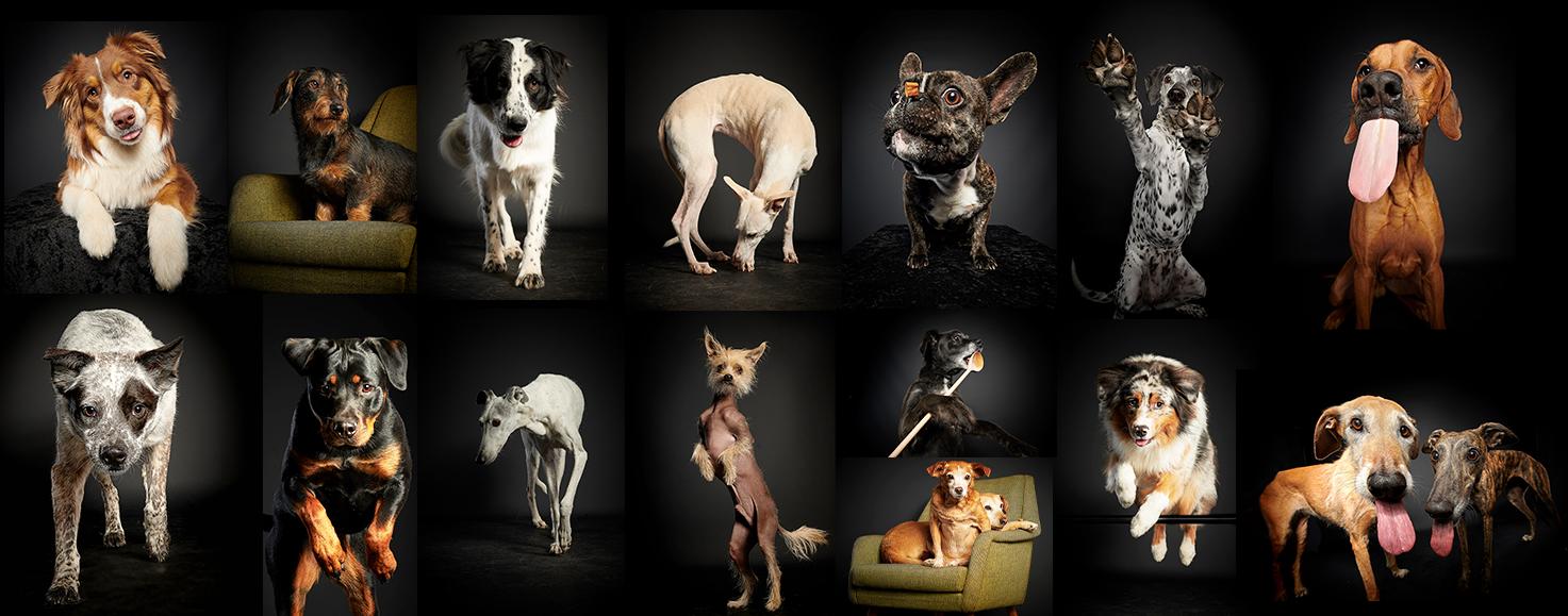 Hundefotografie Stuttgart
