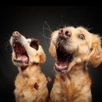 Hundefotografie Termin
