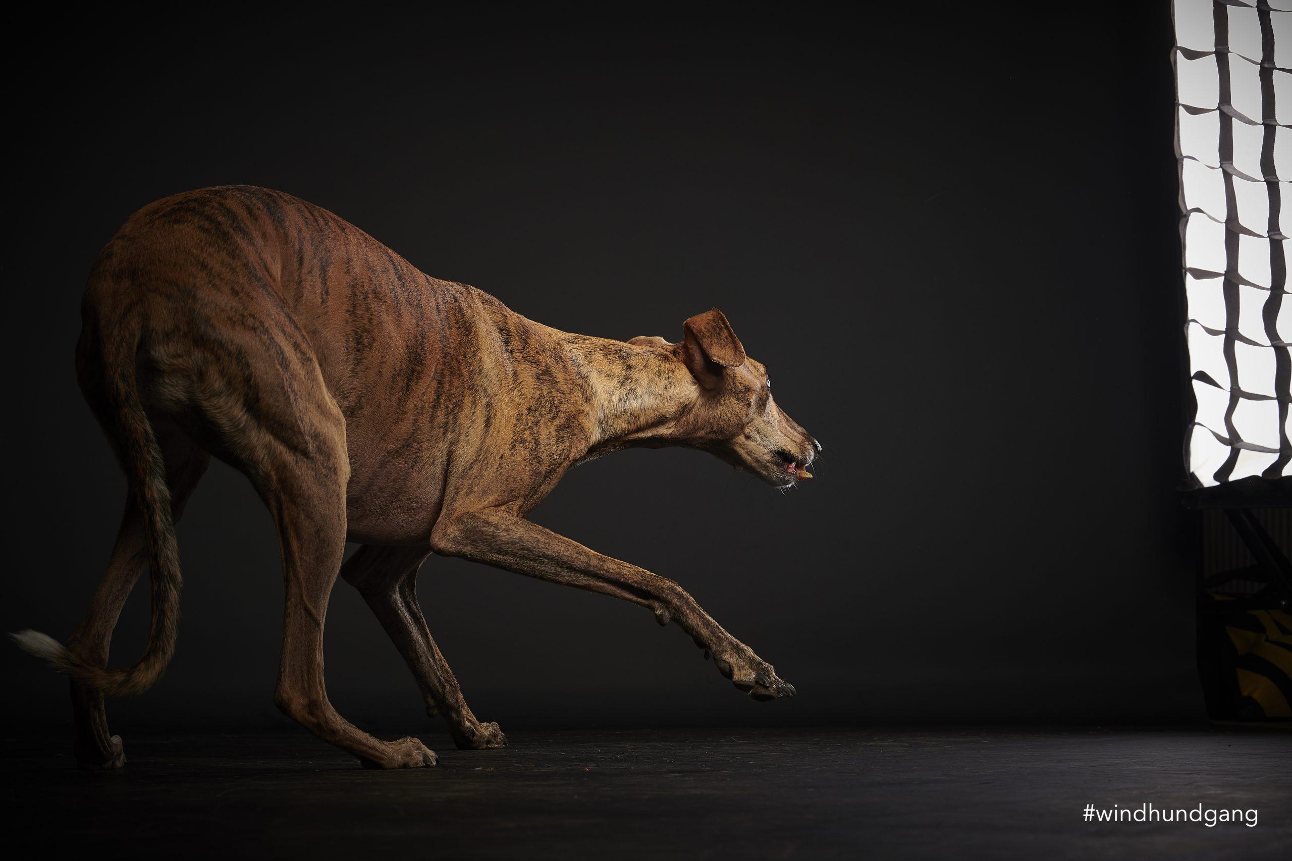 ängstliche Hunde fotografieren