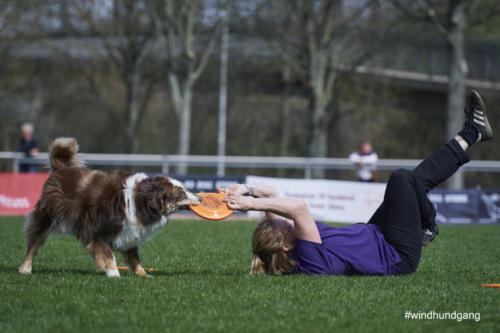 Frisbee Dog 15