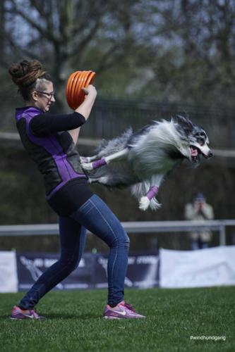 Frisbee Dog 17