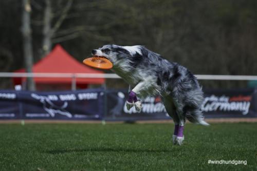 Frisbee Dog 20