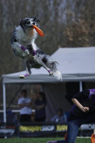 Frisbee Dog 24