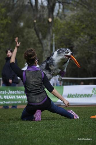 Frisbee Dog 26