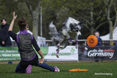 Frisbee Dog 27