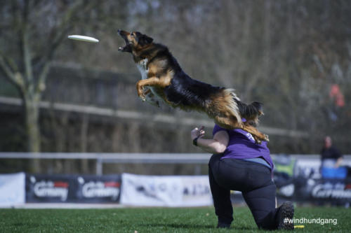 Frisbee Dog 28