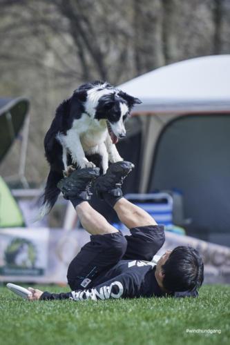 Frisbee Dog 3
