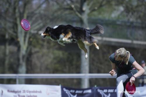 Frisbee Dog 34