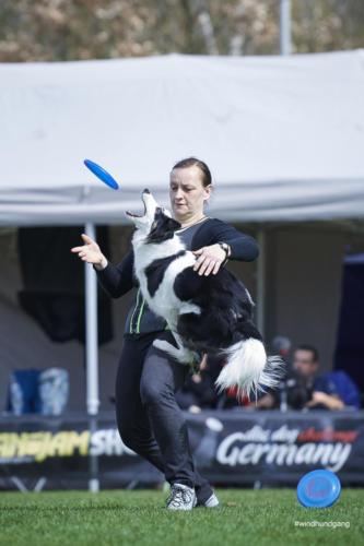 Frisbee Dog 37