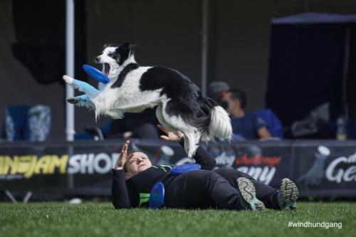 Frisbee Dog 38