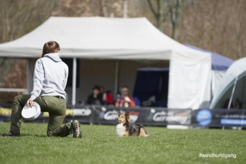 Frisbee Dog 41