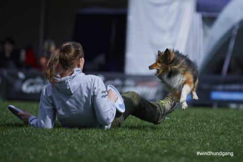 Frisbee Dog 43