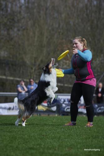 Frisbee Dog 5