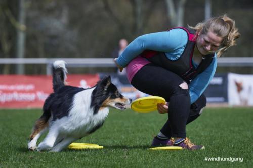 Frisbee Dog 8