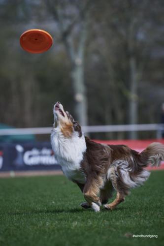 Frisbee Dog 9