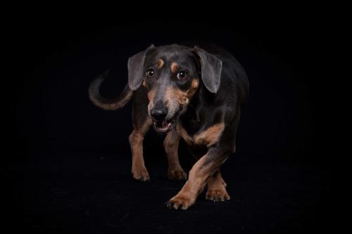Hundefoto Koeln11