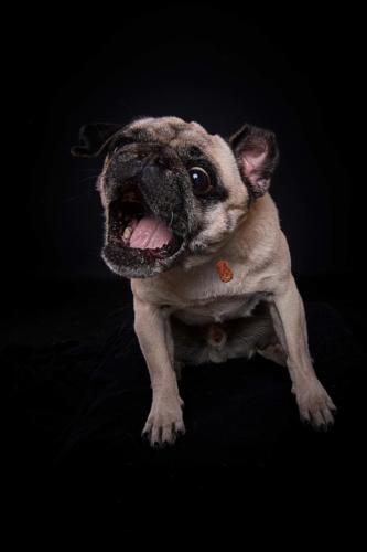 Hundefoto Koeln17 1