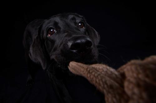 Hundefoto Koeln18