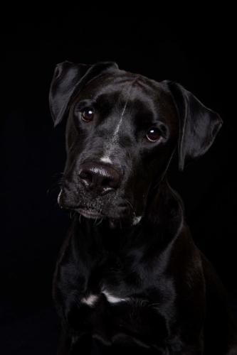 Hundefoto Koeln20