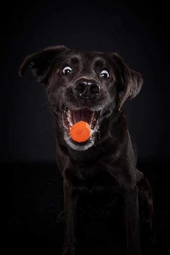 Hundefoto Koeln22 1