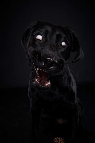 Hundefoto Koeln24 1