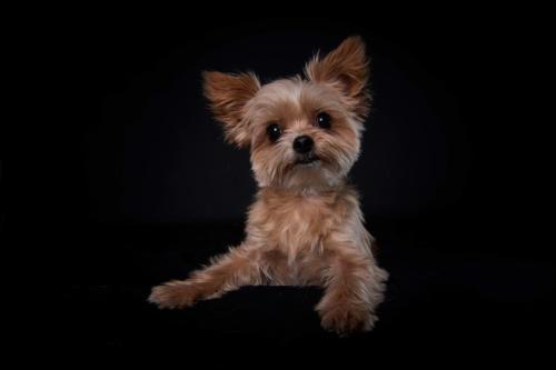 Hundefoto Koeln36