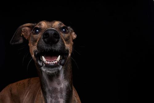 Hundefoto Koeln4