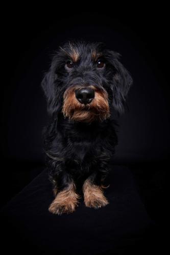 Hundefoto Koeln54