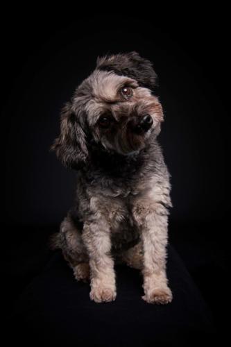 Hundefoto Koeln57