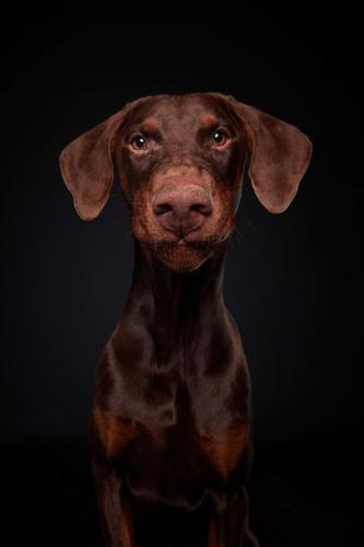 Hundefoto Koeln62