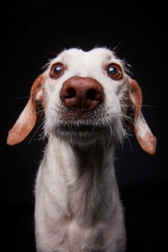 Hundefoto Koeln63