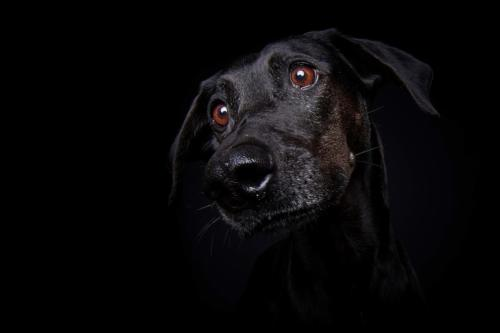 Hundefoto Koeln72