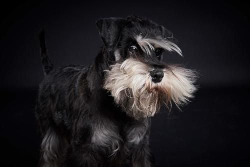 Hundefoto Koeln78