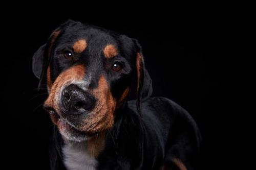 Hundefoto Koeln9