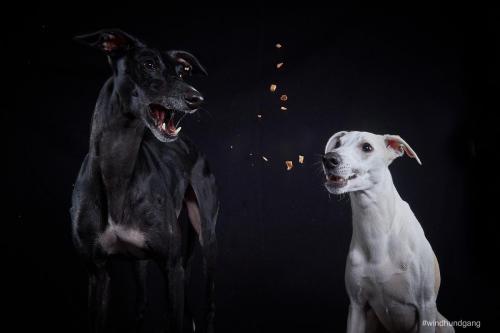Tierfoto Köln Elvis und Loki